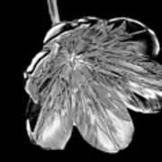 Tulip Liquid Metal Art Print