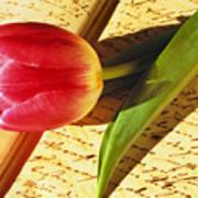 Tulip On An Open Antique Book Art Print