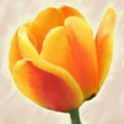 Tulip Orange Art Print