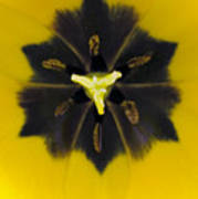 Tulip Pixie Art Print