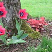 Tulip Poppie Art Print