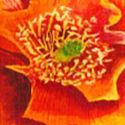 Tulip Prickly Pear Art Print