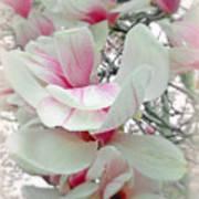 Tulip Tree Blossoms - Magnolia Liliiflora Art Print