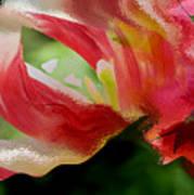 Tulip Wave And Ripple Art Print