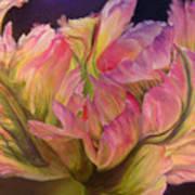 Tulipe Explosee Art Print