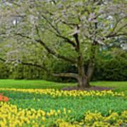 Tulips And Cherry Blossom 2 Art Print