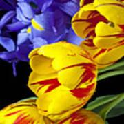 Tulips And Iris Art Print
