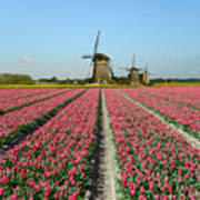 Tulips And Windmills In Holland Art Print