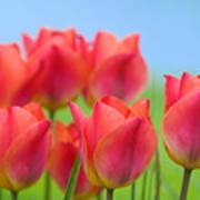 Tulips Close Up  Art Print
