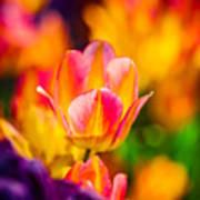 Tulips Enchanting 15 Art Print