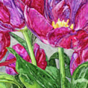 Tulips From A Friend Art Print