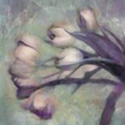 Tulips Going West Art Print