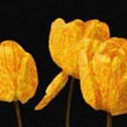 Tulips - Id 16235-220512-0422 Art Print