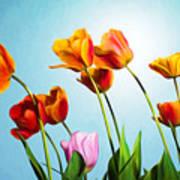 Tulips Art Print by Trevor Wintle