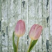 Tulips Two Art Print