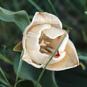 Tulipsandbluebells Art Print