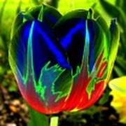 Tulipshow Art Print
