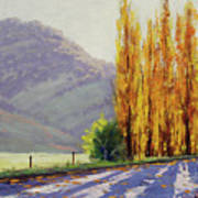 Tumut Poplars Art Print