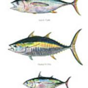 Tuna Fishes Art Print