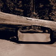 Tunnel Log - Sequoia National Park Art Print