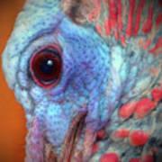 Turkey Head Shot Art Print