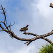 Turkey Vulture On Dead Tree Art Print