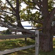 Turn At The Tree Art Print