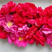 Turning Up Roses Art Print