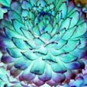 Turquoise Succulent 1 Art Print