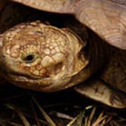 Turtle Closeup Art Print