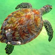 Turtle Day In Titusville,florida Art Print