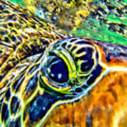 Turtle Eye Art Print