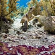 Turtle Red Carpet Art Print