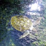 Turtle Water Glide Art Print