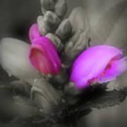 Turtlehead Flower Art Print
