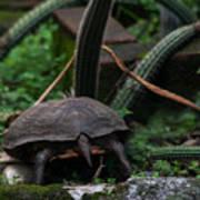 Turtles Butt Art Print