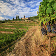 Tuscan Vineyard And Grapes Art Print