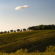 Tuscan Vineyard Art Print