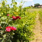 Tuscany Villa And Roses Art Print