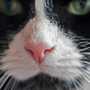 Tuxedo Cat Whiskers And Pink Nose Art Print