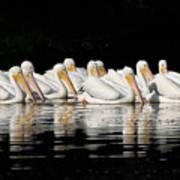 Twelve White Pelicans On A Dark Background. Art Print