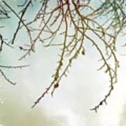 Twigs And Winter Sky Two Art Print