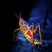 Twilight Grasshopper Art Print