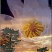 Twilight Lily Art Print
