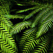 Twilight Rainforest Fern  Art Print