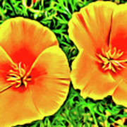 Twin Poppies Art Print