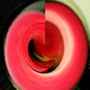 Twisted Calla Art Print