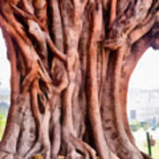 Twisted Gnarled Tree Art Print