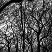 Twisted Trees Art Print