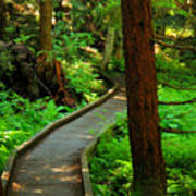 Twisting Path Through The Woods Art Print